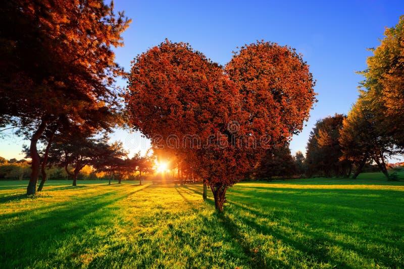 心脏与红色的形状树在公园离开 背景爱红色玫瑰色符号白色 库存图片