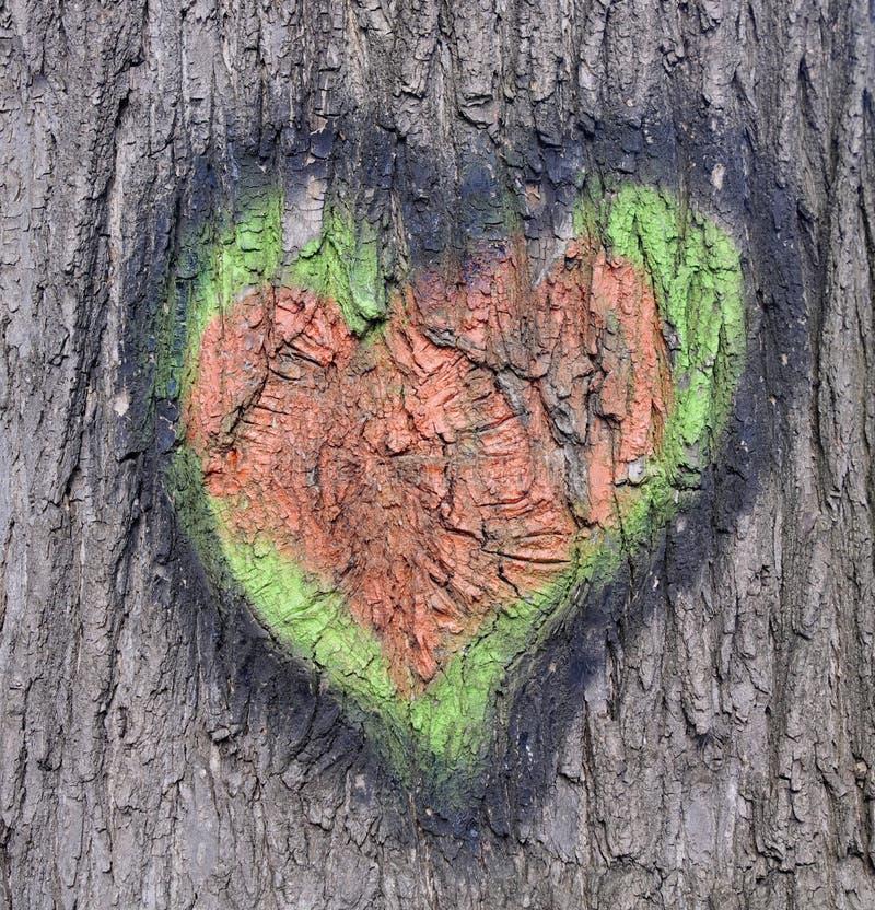 心脏图画在吠声的在树 免版税库存照片