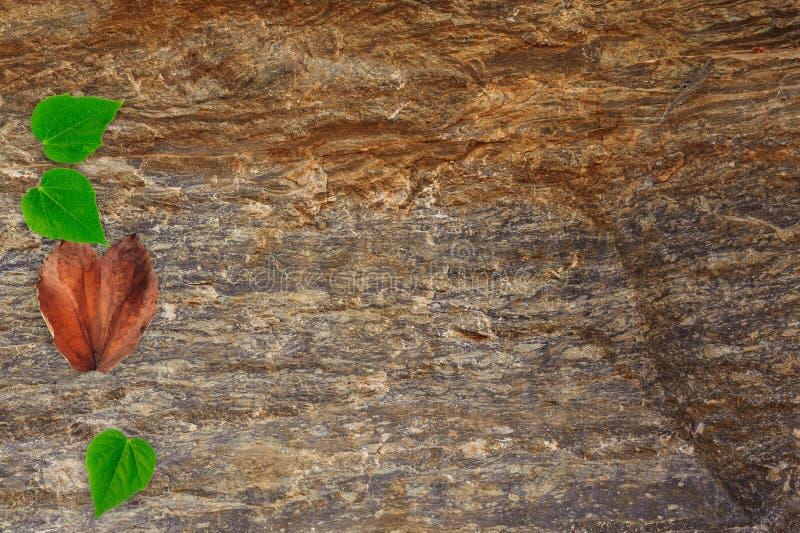 心脏在岩石的形状叶子 免版税库存图片