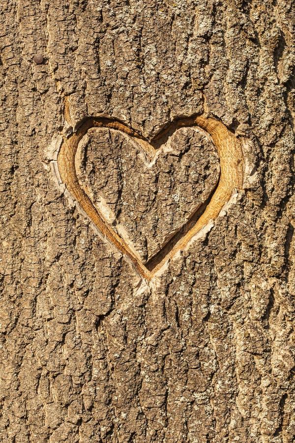心脏在树的吠声雕刻了。 库存照片