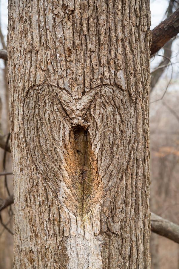 心脏在树的树干雕刻了 免版税库存图片