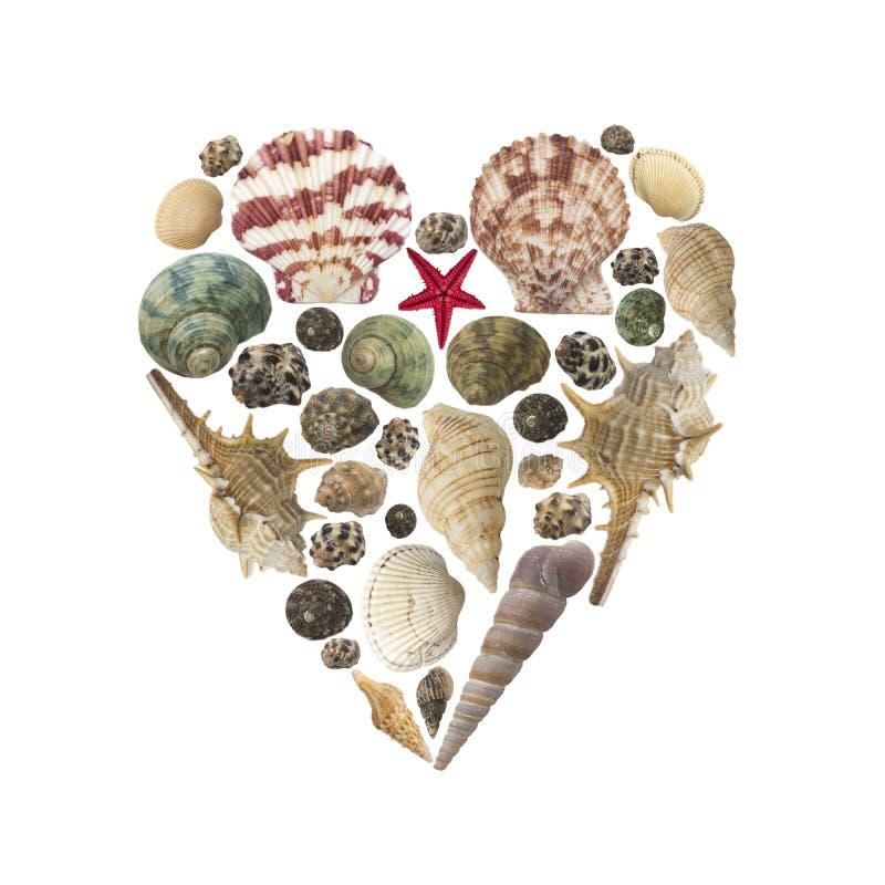 心脏形状被隔绝的由壳做成 免版税库存图片