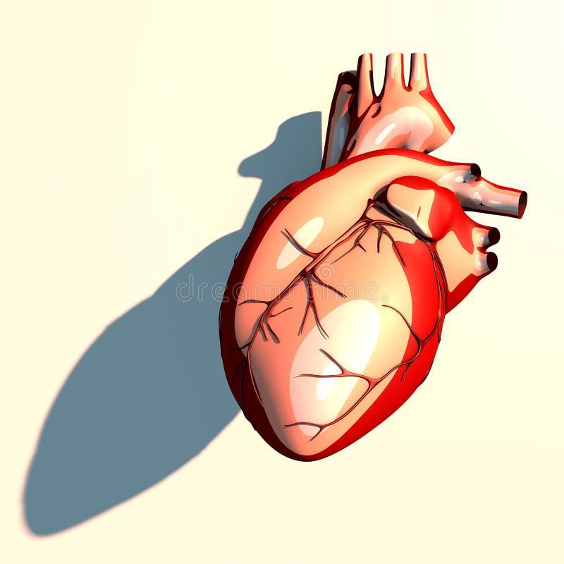 心脏是一种肌肉器官,通过血管抽血液 向量例证