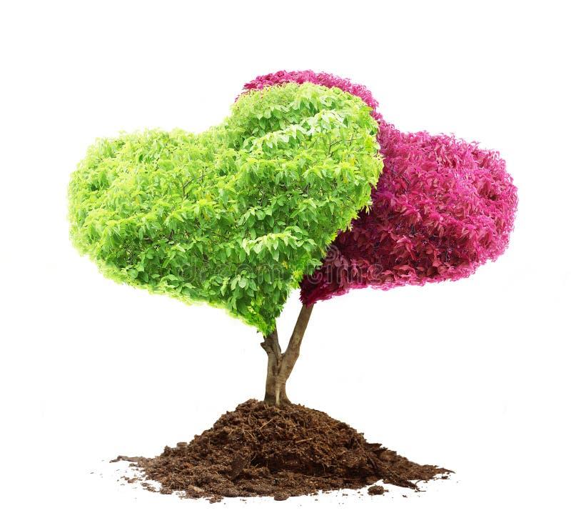 心脏树和土壤 免版税库存图片