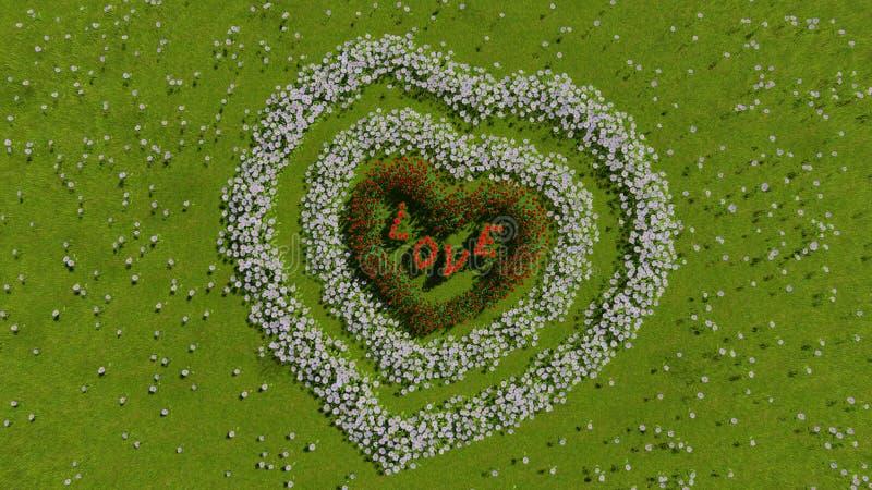 以心脏的形式各种各样的花在一个绿色领域,作为华伦泰` s天和爱的标志 图库摄影