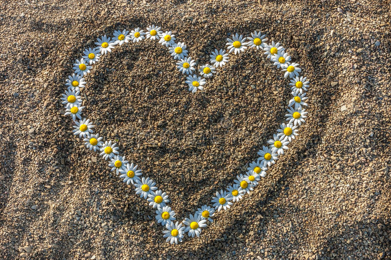 以心脏的形式雏菊链环在沙子 免版税库存照片