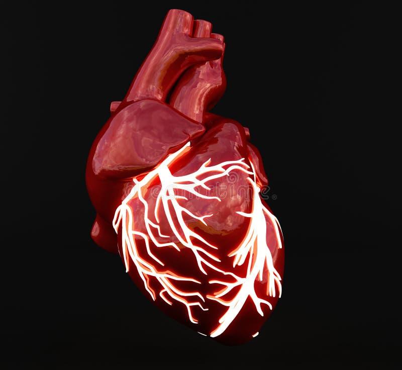 心脏血管光  库存例证