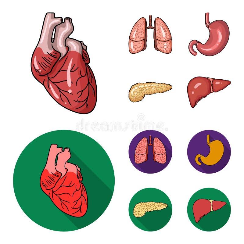 心脏,肺,胃,胰腺 人体器官设置了在动画片,平的样式传染媒介标志股票图片