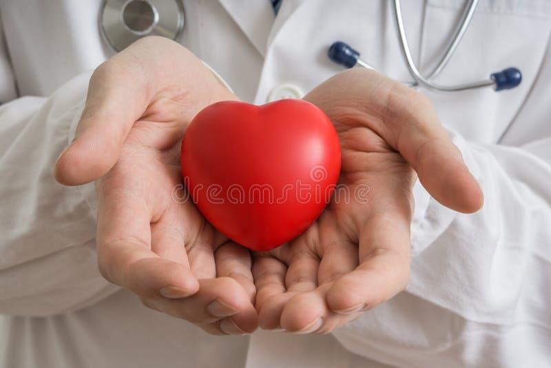 心脏移植概念 医生在手上拿着红色心脏模型 免版税库存照片