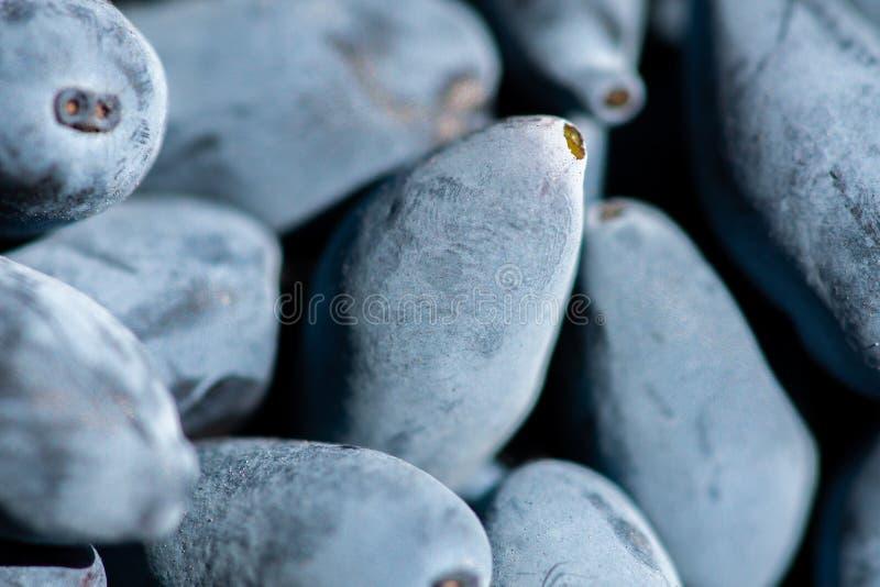 忍冬属植物特写镜头成熟莓果  免版税库存图片
