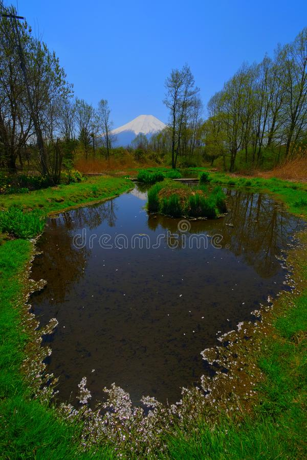 忍野村庄池塘春天和Mt的 富士日本 免版税库存图片