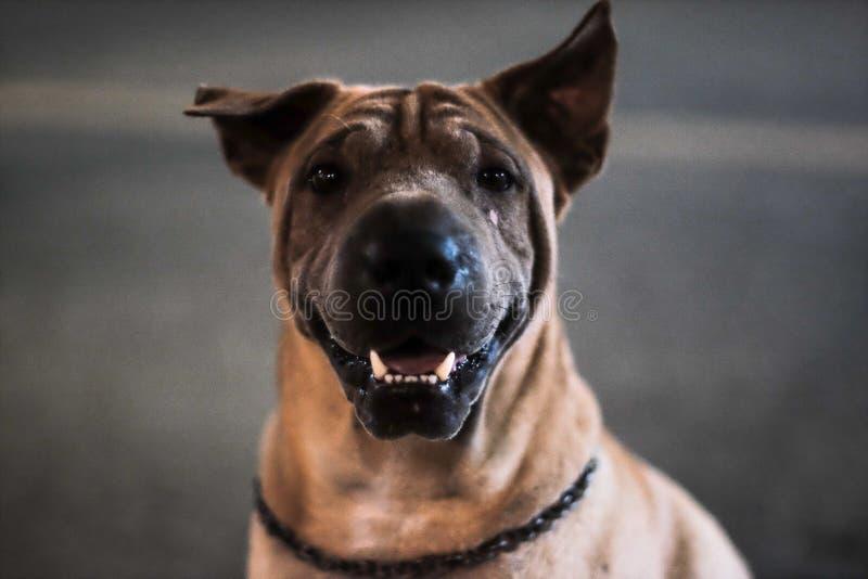 忠实的狗 库存照片