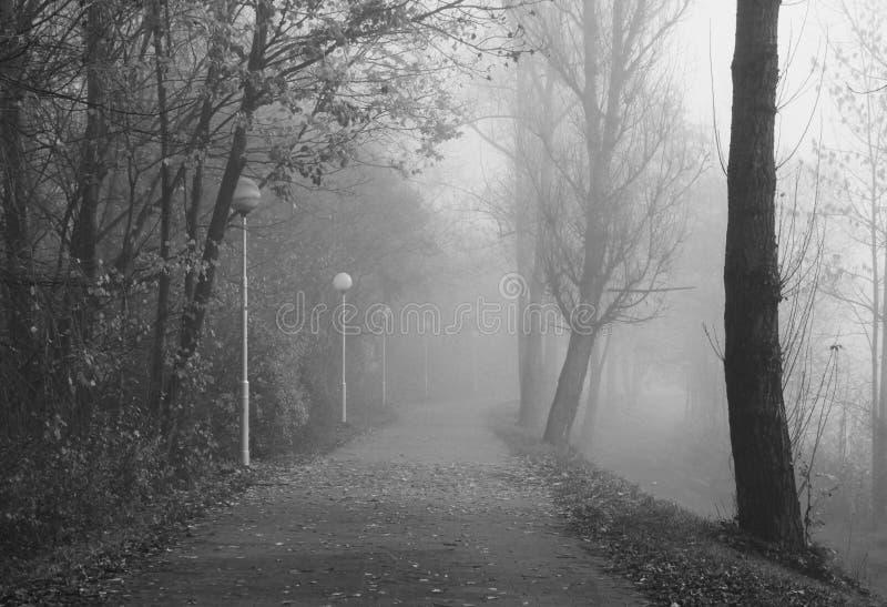 忧郁的有雾的秋天 免版税库存图片