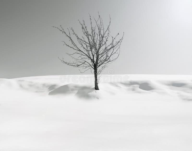 忧郁结构树 库存图片