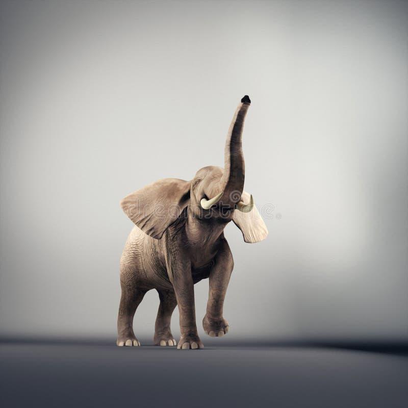 快乐的大象在演播室 库存照片