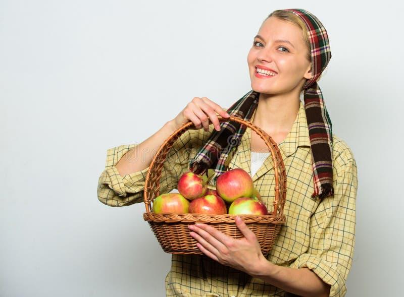 快乐的妇女运载篮子用自然果子 妇女花匠土气样式举行篮子用苹果在光收获 免版税库存图片