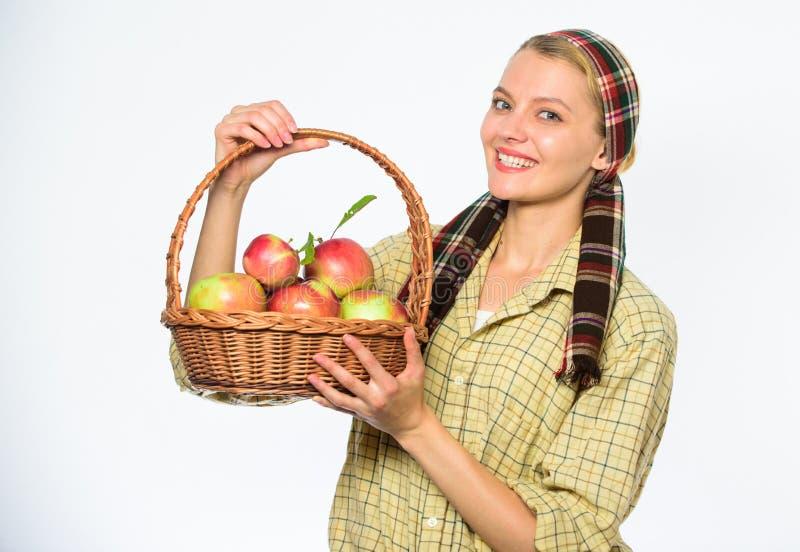 快乐的妇女运载篮子用自然果子 妇女花匠土气样式举行篮子用苹果在白色收获 库存照片