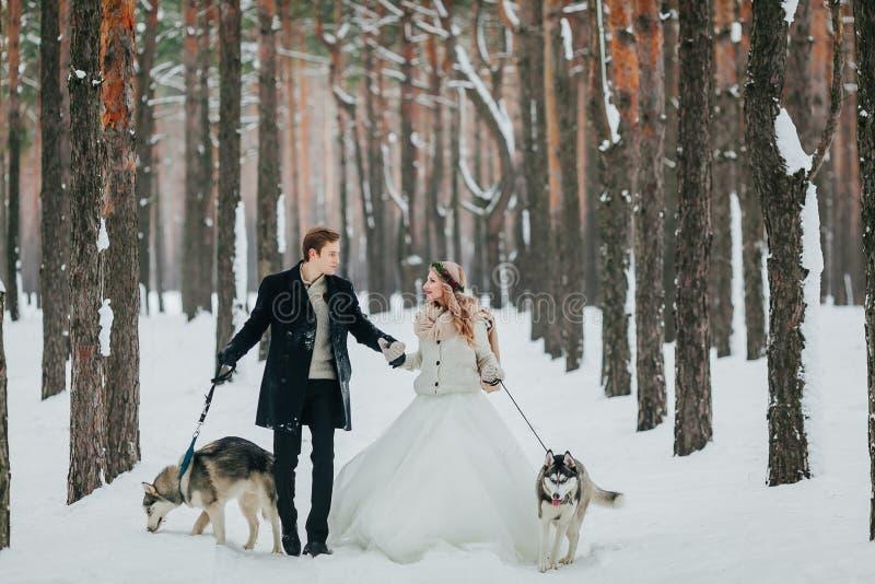快乐的新婚佳偶在有两西伯利亚爱斯基摩人的多雪的森林里走 户外婚姻冬天的新娘新郎 附庸风雅 库存照片