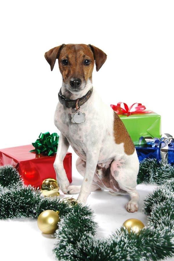 快活圣诞节的小狗 图库摄影