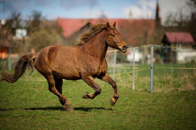 快速地跑的马 库存图片