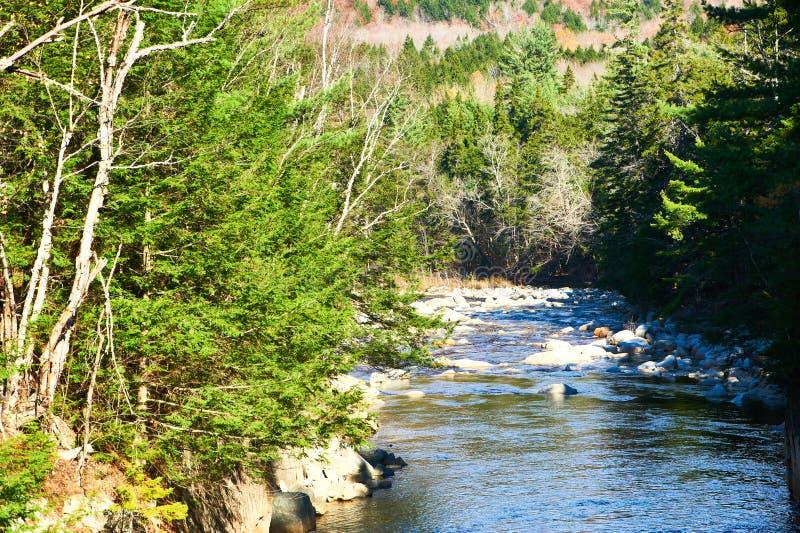 快速河在白色山国家森林里 免版税库存照片