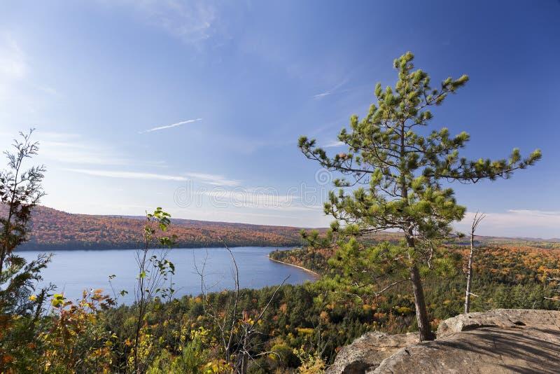 忽略秋天安大略湖,加拿大的美国五针松树 免版税库存图片