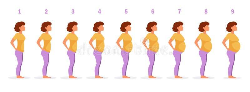 怀孕传染媒介阶段  向量例证