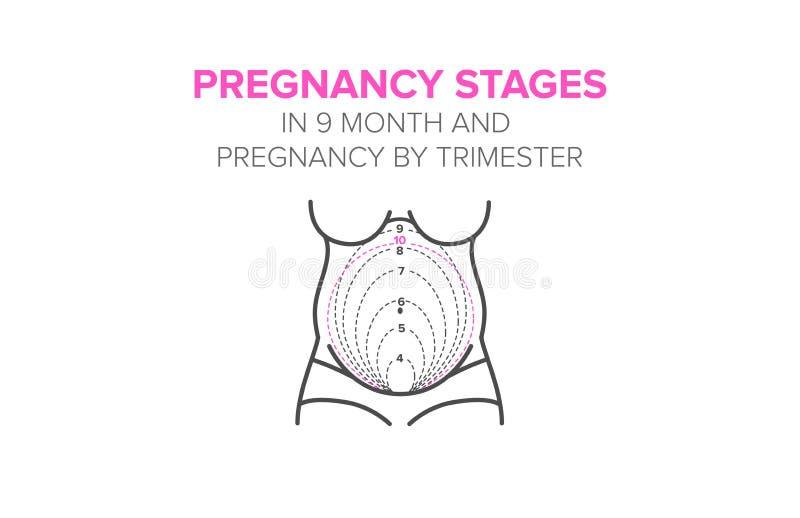 怀孕阶段在9个月 库存例证