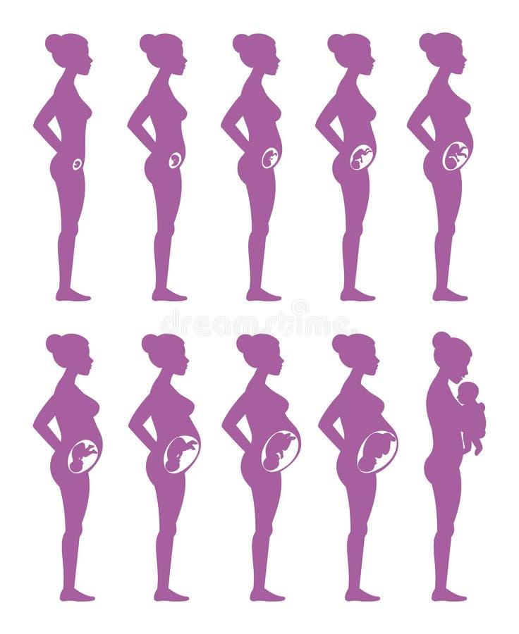 怀孕阶段 孕妇、妈妈和婴孩导航在白色背景隔绝的紫色剪影 向量例证