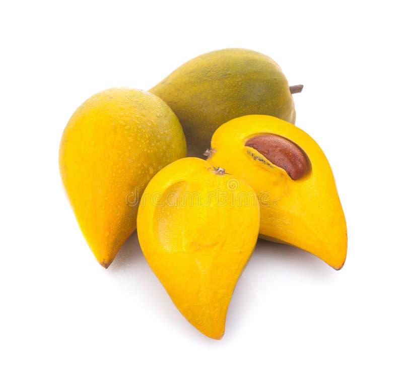 怂恿果子, Canistel,黄色美洲热带树Pouteria campechiana在白色背景的Kunth Baehni 免版税库存照片