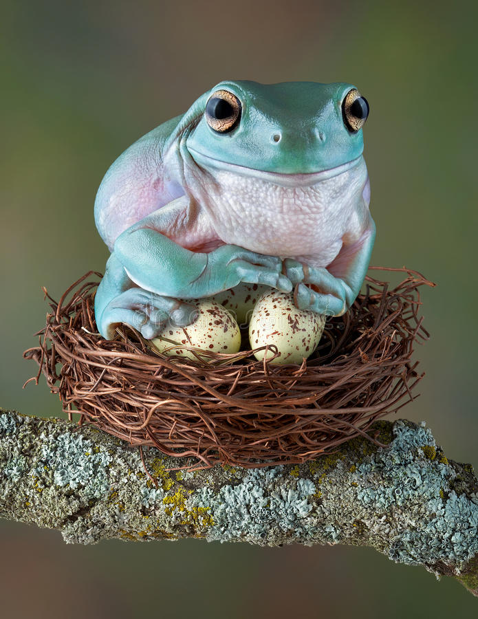 怂恿青蛙 免版税图库摄影
