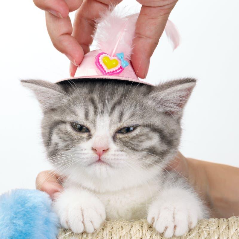怏怏不乐对于猫在他的头的玩具帽子在人` s手上 免版税库存图片