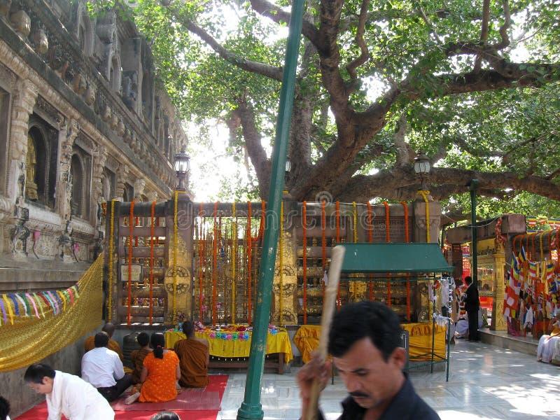 思考在Bodhi树-伟大的菩萨Mahabodhi Mahavihara寺庙BodhGaya印度下的人们 免版税库存图片