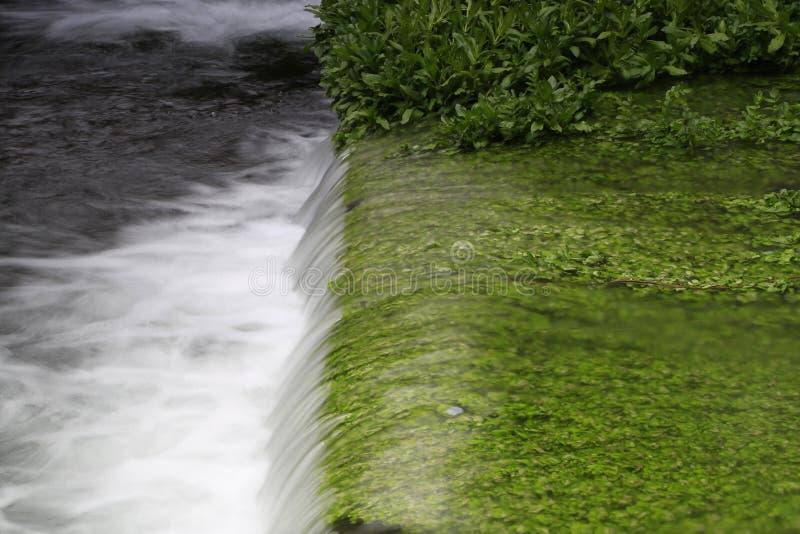 急流和绿草 图库摄影