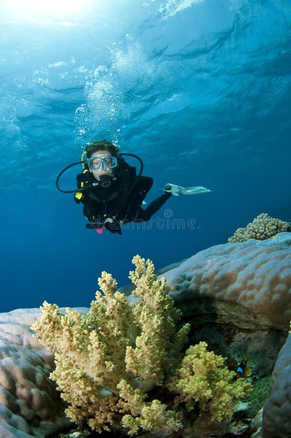 性感潜水员的水肺 免版税图库摄影