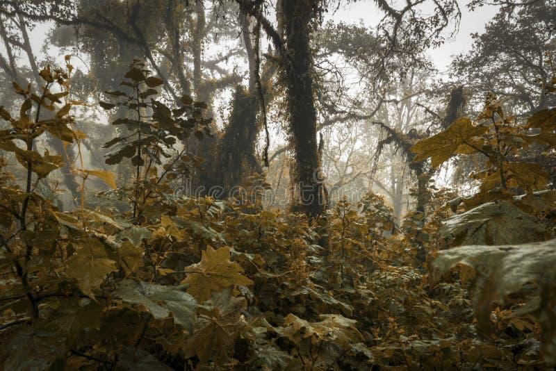 怪森林景观 库存照片