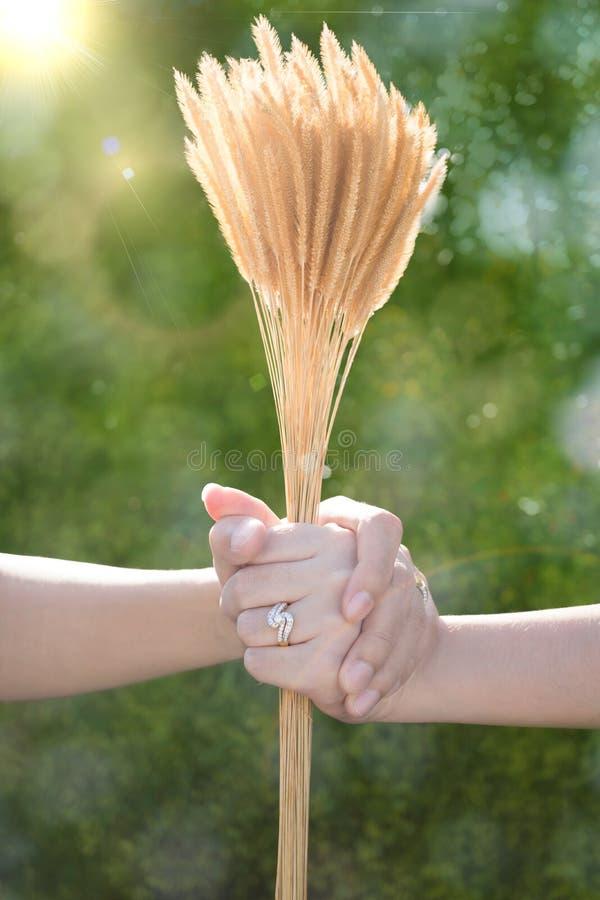 恋人结合拿着手和草花与bokeh backgro 免版税库存图片