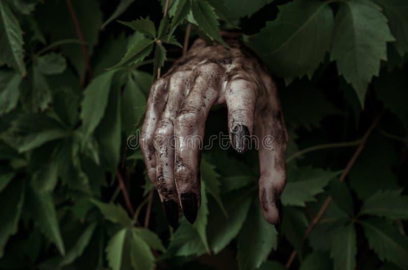 恐怖和万圣夜题材:有黑人指甲盖蛇神的可怕的肮脏的手爬出绿色叶子,走的死的启示 免版税库存图片