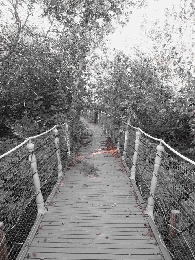 恐怖桥梁 老木桥的图象 免版税库存图片