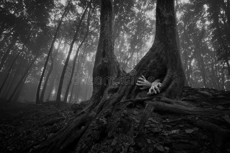 恐怖森林场面用手在万圣夜 免版税库存图片
