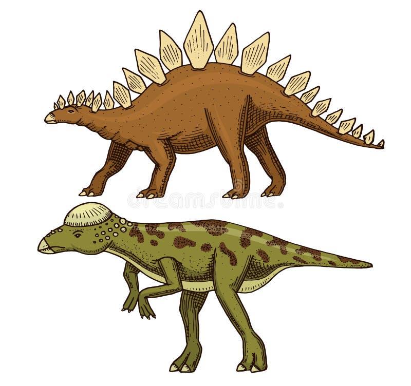恐龙剑龙, Pachycephalosaurus,勒苏维斯龙,骨骼,化石 史前爬行动物,动物刻记了手 皇族释放例证
