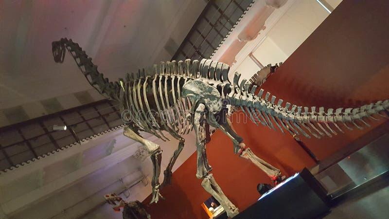 恐龙在博物馆在悉尼,NSW,澳大利亚 图库摄影