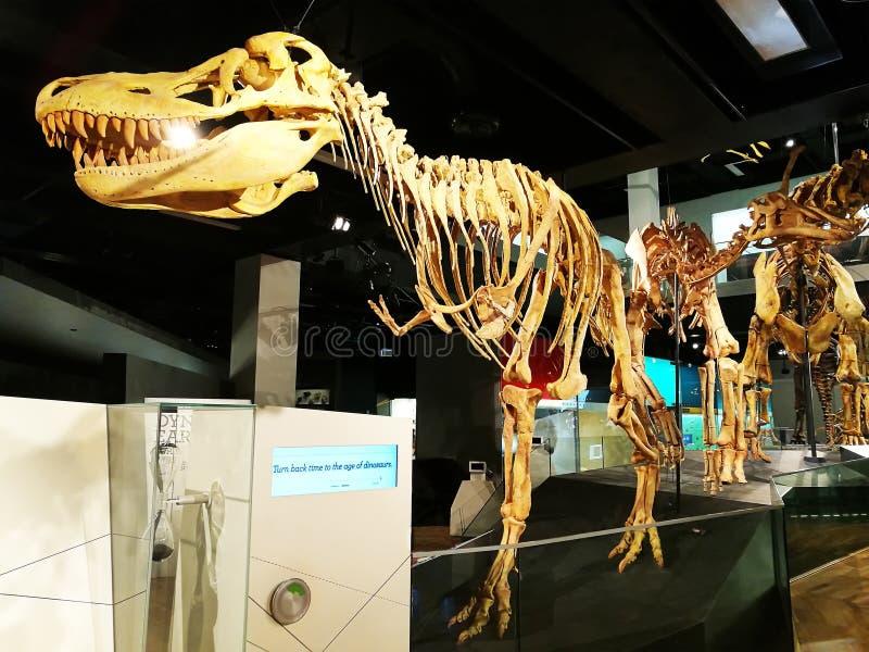 恐龙骨骼在博物馆 图库摄影