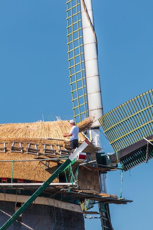 恢复有新的芦苇的撒切尔一台老荷兰风车 免版税库存照片