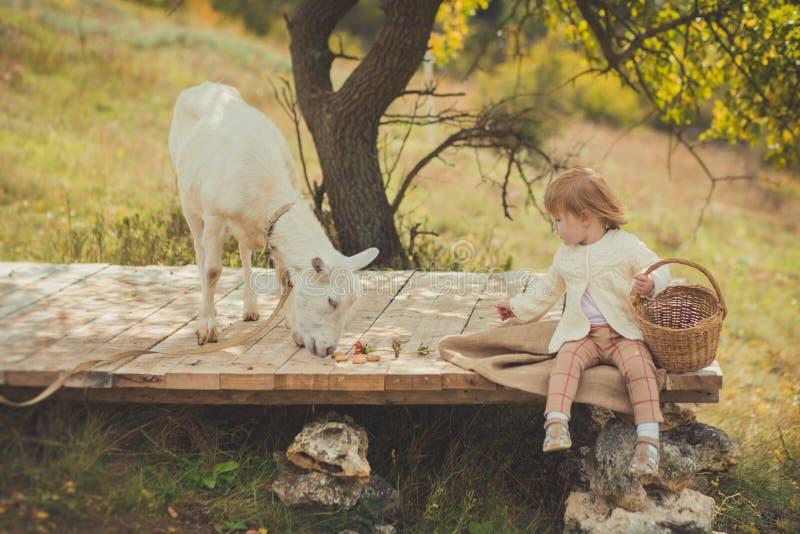 恰好时髦的女孩穿戴在有花费时间的金发的毛线衣在有篮子的村庄哺养动物山羊潜逃的有很多苹果 图库摄影