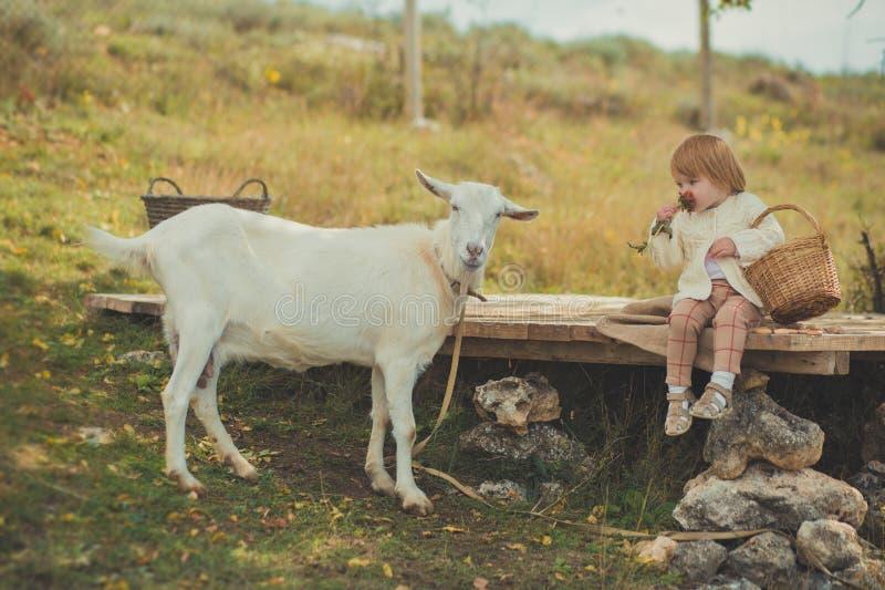 恰好时髦的女孩穿戴在有花费时间的金发的毛线衣在有篮子的村庄哺养动物山羊潜逃的有很多苹果 免版税库存照片