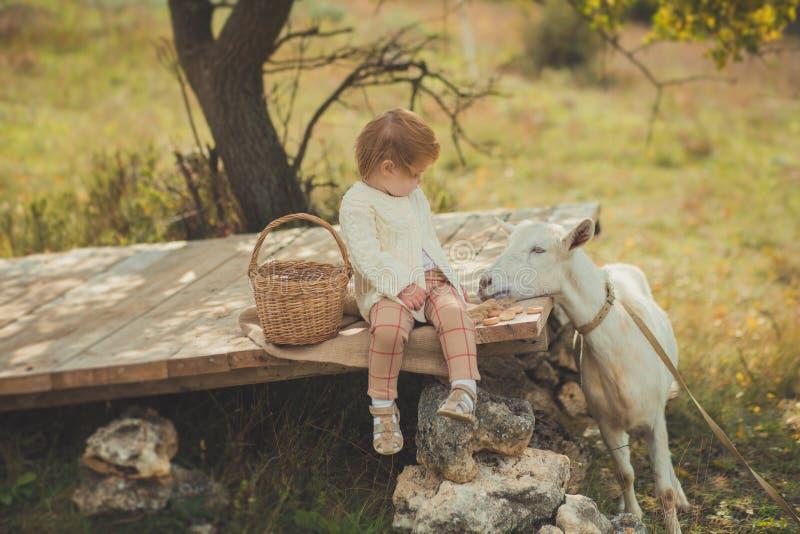 恰好时髦的女孩穿戴在有花费时间的金发的毛线衣在有篮子的村庄哺养动物山羊潜逃的有很多苹果 库存照片