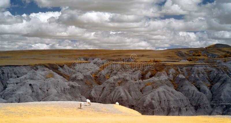 恶地国家公园,红外线 南达科他 免版税库存图片