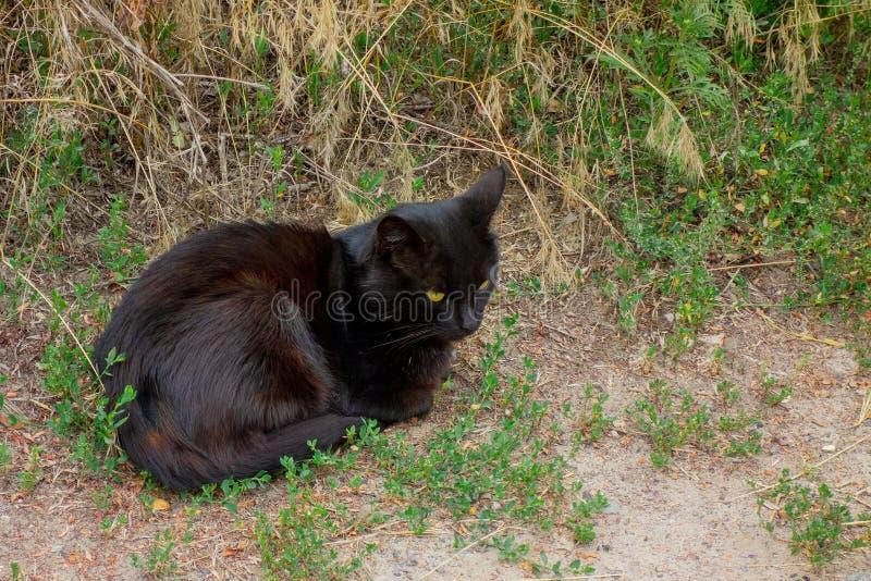 恶意嘘声坐在绿草的地面在路附近 关心的家养的宠物或无家可归的动物 库存图片