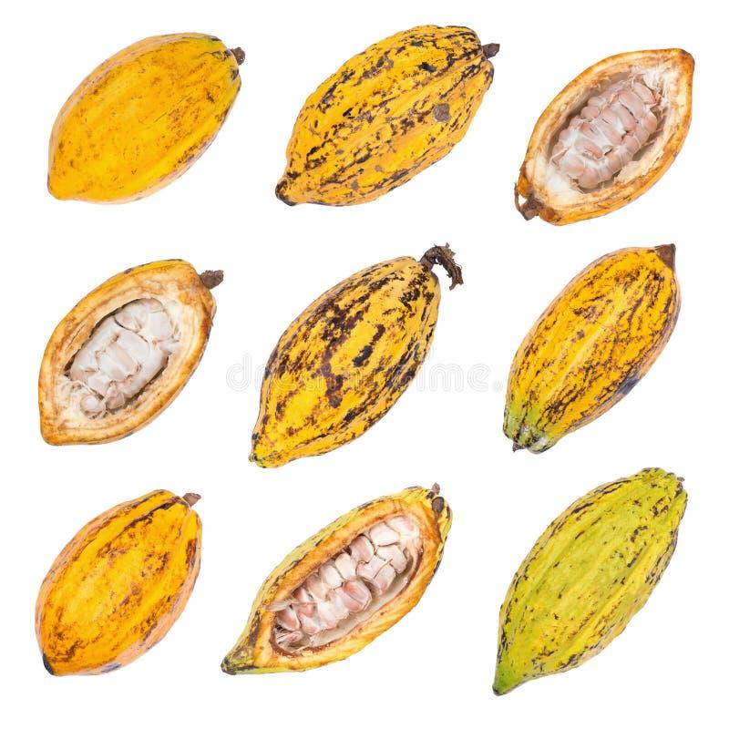 恶果子,未加工的恶豆,在白色backgr隔绝的可可粉荚 免版税库存照片